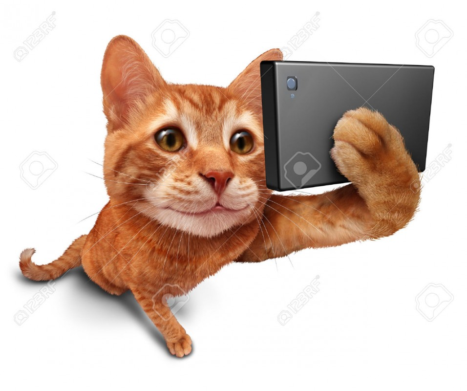 45261690-Gatto-Selfie-su-uno -sfondo-bianco-come-un-simpatico-gattino-arancione-tabby-con-un-sorriso-in-prospe- Archivio-Fotografico.jpg ... 5bf30f155fbd